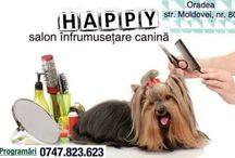 Happy Dog Oradea