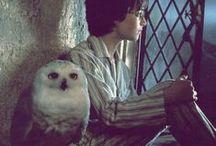 * ~ Harry Potter ~ *