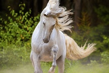 equestrian / show jumping,dressage,shows,horses,wild mustangs etc