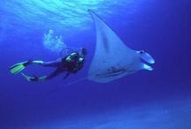 Scuba Diving Spots