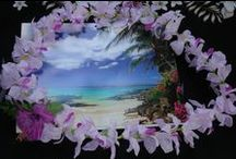 Beaches / Love to take walks along the beach / by Yvonne Jacobson