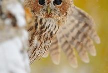 owl fever  / by Maddey-Lynn Nisbet