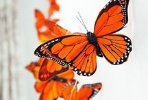 Butterflies / by Ursula Neal