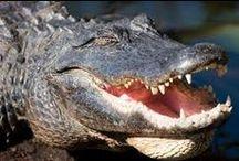 Alligators/Caiman! / by Onyx