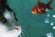 Poisson poisson qui tourne en rond... / by Myriam