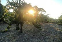 Tablas Creek Vineyard / Each season offers unique beauty
