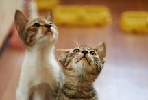 Adorable animals! / Animals