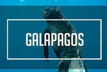 Galápagos Islands, Ecuador / The exotic animal-filled Galapagos Islands