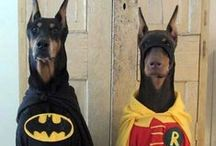 Halloween / Pet costumes, pet safety and all things Halloween.