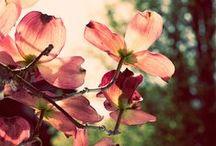 Beautiful Florals / Flowers, florals, blossoms and petals