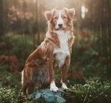 My Dog Photos / Natural light dog photography is pleasing to the eye. These images are some of my favorite frames from the past 7 years.