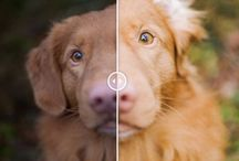 Dog Photography Tips / Dog Photography Tips includes everything from technical help to inspiration and knowledge.