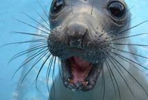 Smiling animals / Because cuteness