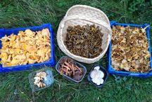 Mushrooms, mushrooms