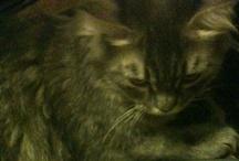 SISILYA / MY CAT