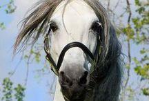 Horses / all things horses