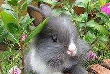 aaaahhhh! So darn cute! / Pure innocent beauty