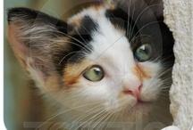 Catlover gifts  / Gift ideas and products for cat lovers. Geschenke und Geschenkideen für Katzen Liebhaber.