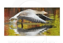 Zazzle nature photography / My Zazzle nature photo products, gifts for nature-lovers