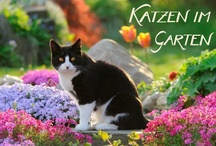 Calendar nature animal, Kalender  / Calendar for animal and nature lovers from different artists and publishers ( Calvendo , Zazzle ....)