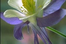 Flowers / by Yamila Z