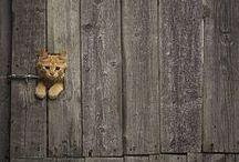 animal×animal cats / 可愛いにゃんこの画像♡