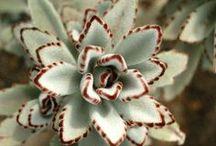 piante&fiori