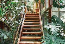 Jungle apprivoisée / Végétation proliférante