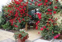 GARDEN / zahradní dekorace, stavby, tipy, rostliny ...