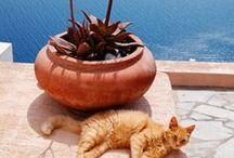 Journée du Chat