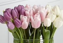 Kukkia/ Flowers