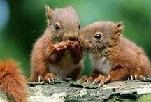 Animals / Allerlei  leuke foto's, Cute  animals.