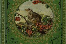 Bird's . / Vogels  klein en groot.