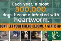Heartworm and Parasite Information / Warmer weather is here, and parasites are always troublesome. The best treatment is prevention. Get your pet on monthly heartworm prevention and parasite control now!