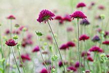 Garden/Flower ref.
