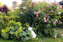 My garden dream / Ein Garten verändert sich ständig und ist zu jeder Jahreszeit einfach zauberhaft. / by Maika