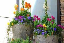 Arreglos con plantas / Ideas para decorar con plantas