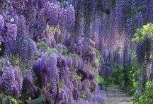 Amaizing Flowers