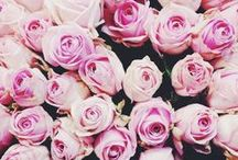 Gorgeous Bouquets