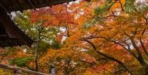 Travel Japan / Beautiful places to visit in Japan