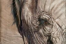 Art of the Animal Kingdom XIX / Our 19th annual wildlife exhibition with guest judge Rosetta