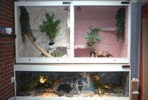 terrarium bouwen voor onze slangen / een nieuw tehuis maken voor onze lieve huisdieren . we begonnen met drie slangen . en het zijn er ondetussen 11. het hoogte punt lag op 30 slangen . dit kwam door eigen kweek. de meeste zijn allemaal verkocht en hebben een goed thuis gevonden