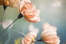 lovely things / by marie selfridge