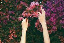 petals , / floral mania ,,