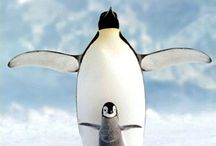 Just about penguins / Pinguins pinguins pinguins... Family update