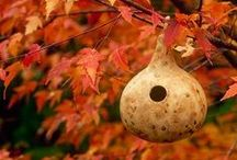 Gourd Birdhouses / Think spring nesting with this fun fall craft.