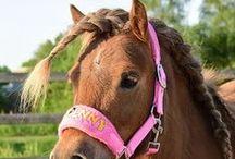 Pony en paard / Leuke pins van pony's en paarden!