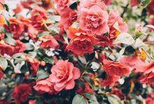 ◇AS BEAUTIFUL AS A FLOWER◇ / Pretty flowers