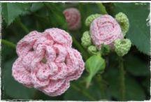 Van knop tot roos / Roosjes in knop - ontluikend roosje - bloeiende roos