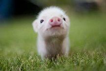 cuteness*